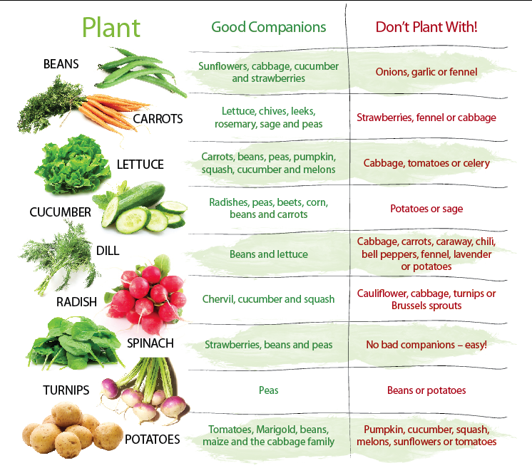 Companion Planting · Vegetable Garden ...