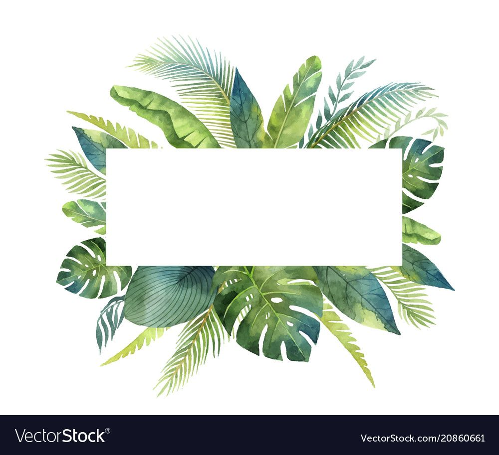 Watercolor Banner Tropical Leaves And Vector Image On Con