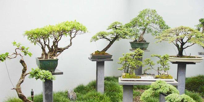 Aprenda como fazer um bonsai passo passo e tenha uma bela for Como cultivar bonsais