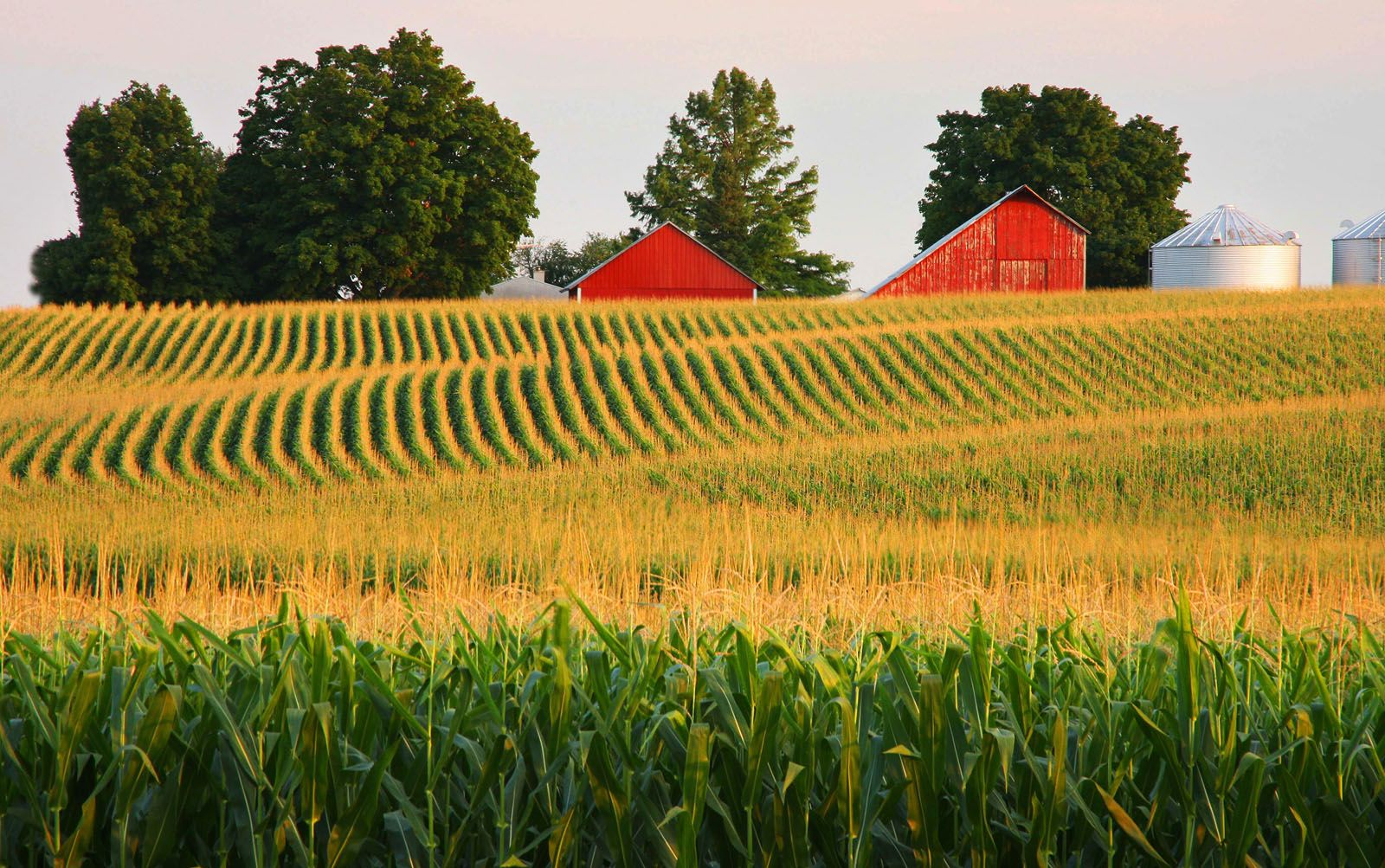 Corn Fields in Illinois America the Beautiful