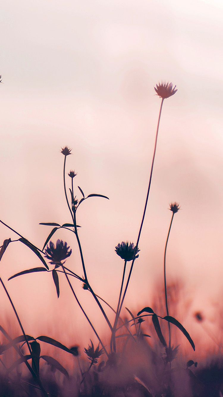 Nf91 Flower Nature Fall Romantic Old Pink Pink Flowers Wallpaper
