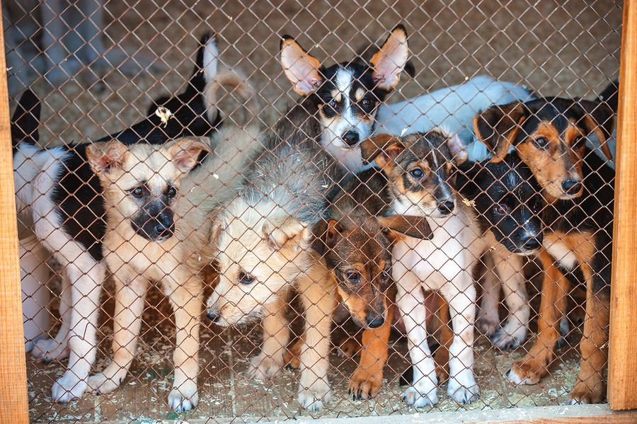 10 Signs Your Dog Is From A Puppy Mill Puppies Puppy Mills Your Dog