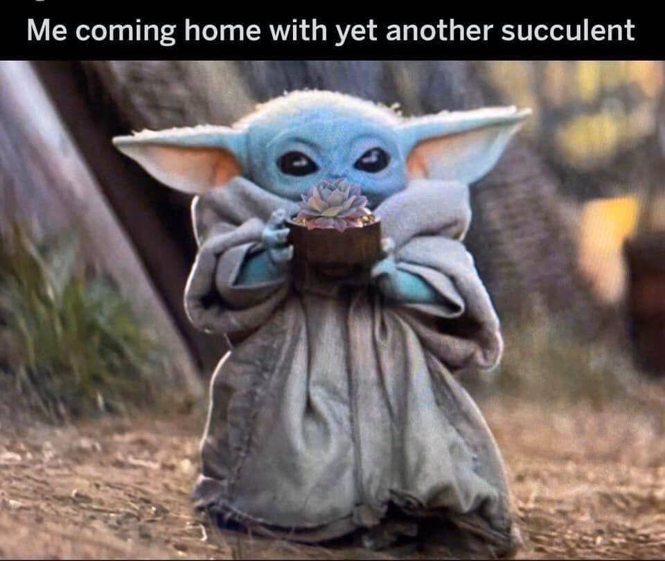 Pin By Rebekah Ujuk On Air Plants Succulents Yoda Meme Yoda Wallpaper Star Wars Memes