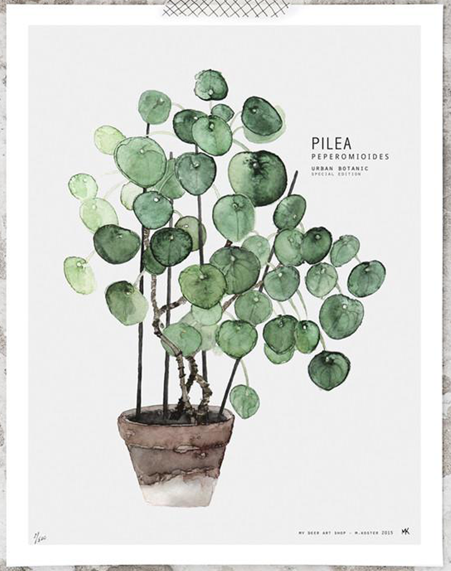 pilea poster 40x50cm my deer human empire shop a interior pinterest aquarelles et. Black Bedroom Furniture Sets. Home Design Ideas