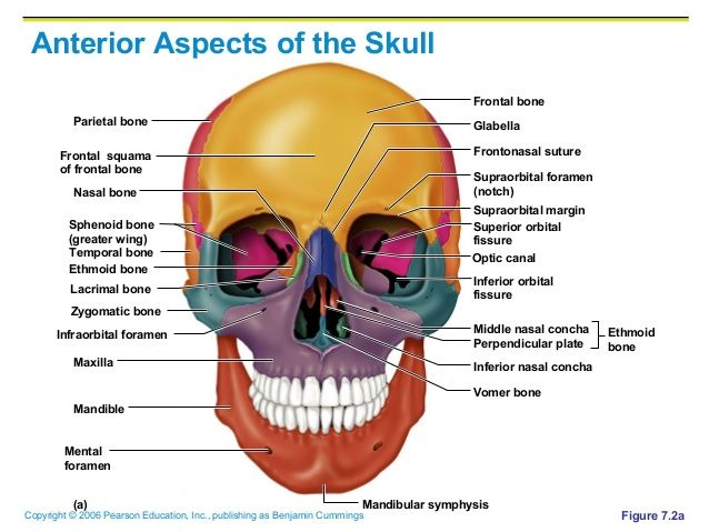 Greater Wing Of Sphenoid Google Search Boards Part I