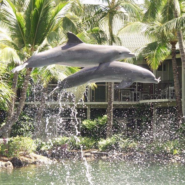 dolphin lagoon the kalala hotel and resort honoluluhawaii - Oahu Hotels And Resorts