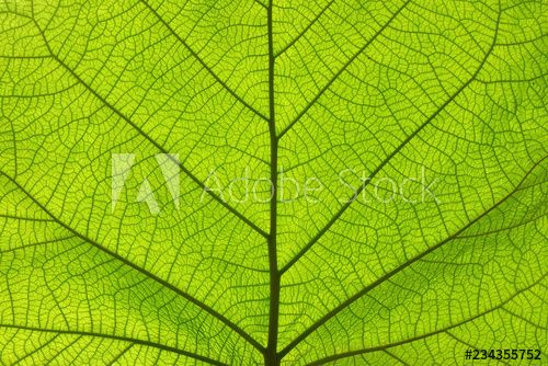 Extreme close up texture of green leaf veins , #spon, #texture, #close, #Extreme, #veins, #leaf #Ad