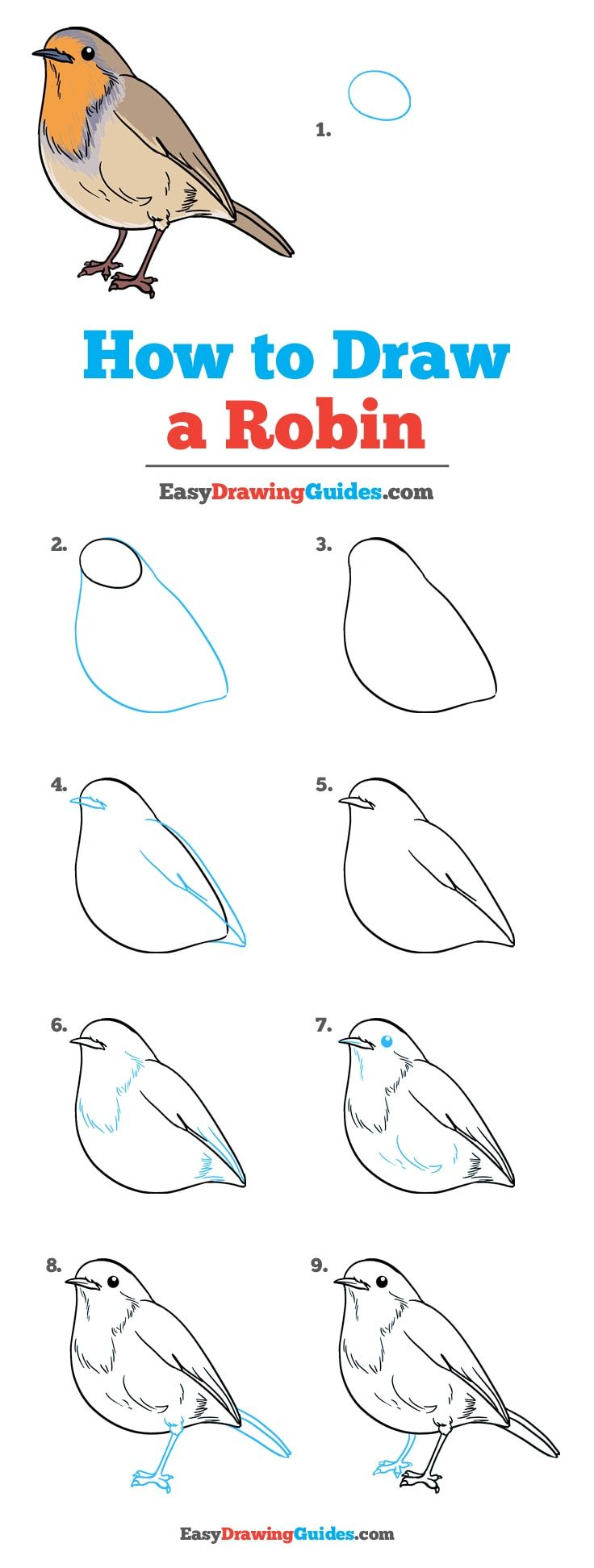 How to Draw a Robin - Really Easy Drawing Tutorial