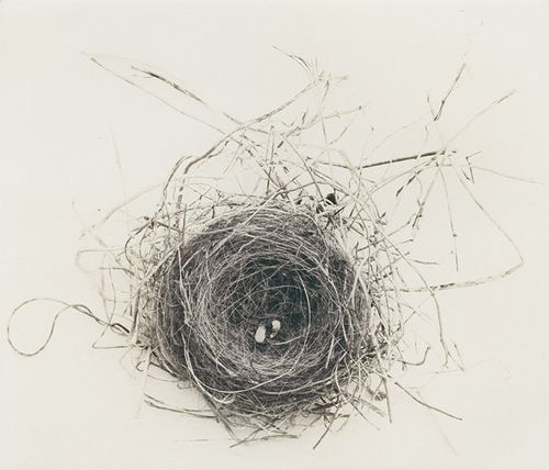 Bird's Nest, by Keith Taylor
