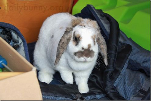 Bunny Helps Human Get Her Gear Together So They Can Go Out and Explore!