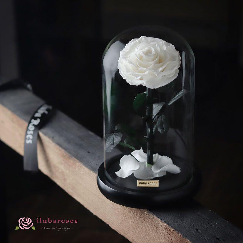 Iluba Preserved White Rose Gift In Dome Vase White Rose Flower White Roses Rose Gift