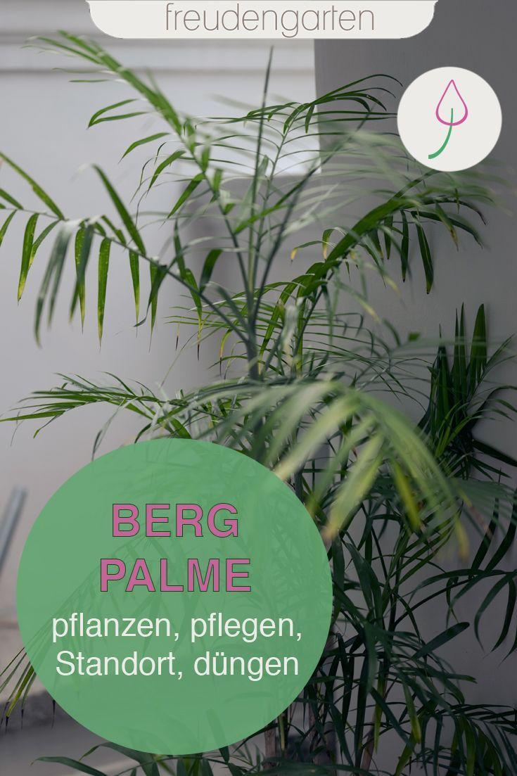 Bergpalmen Pflanzen Und Pflegen Pflanzen Palmen Pflanzen Bergpalme