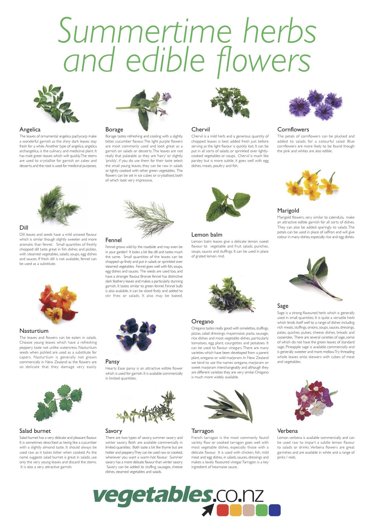 Summertime Herbs And Edible Flowers Vegetables Co Nz Herbs