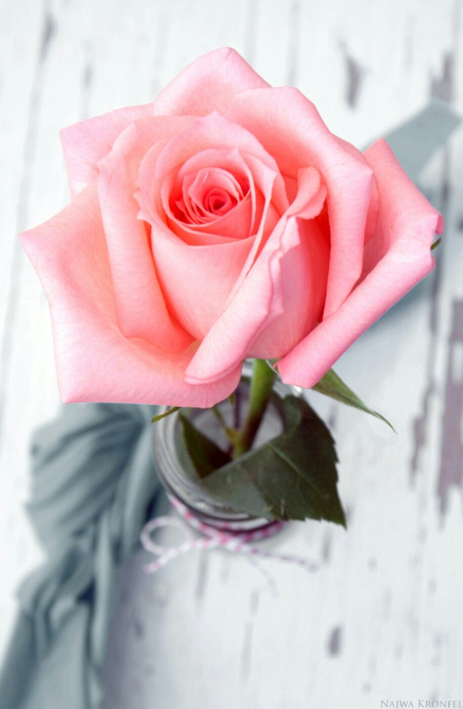 Pink Rose Flower Tumblr Banan Pinterest Pink Rose Flower
