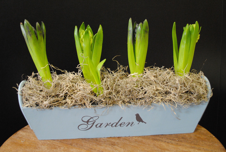 A small garden of hyacinths small garden garden go green
