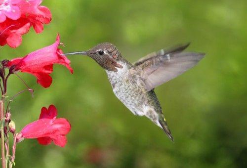 Foto de beija flor na flor 16
