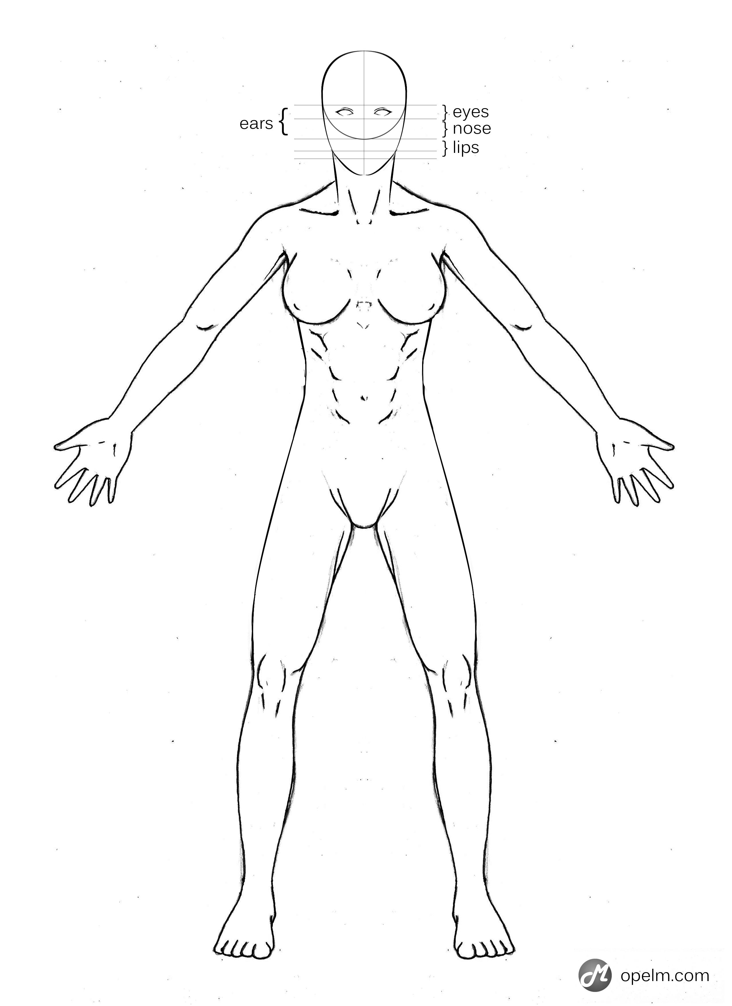 Female Anatomy References For Artists Female Anatomy Reference ...