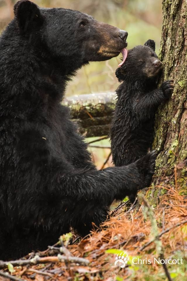 raindropsonroses-65: Chris Norcott Photography