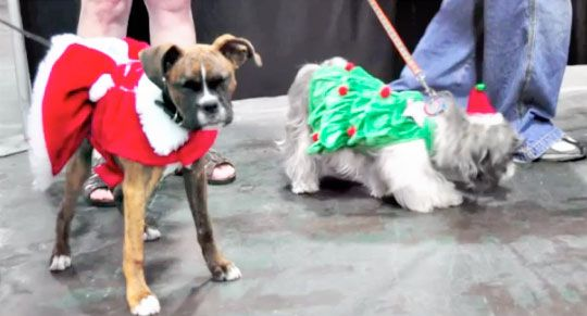 Slideshow: Holiday Pet Expo Dallas http://www.dogtipper.com/bloggie/2012/12/slideshow-holiday-pet-expo-dallas.html