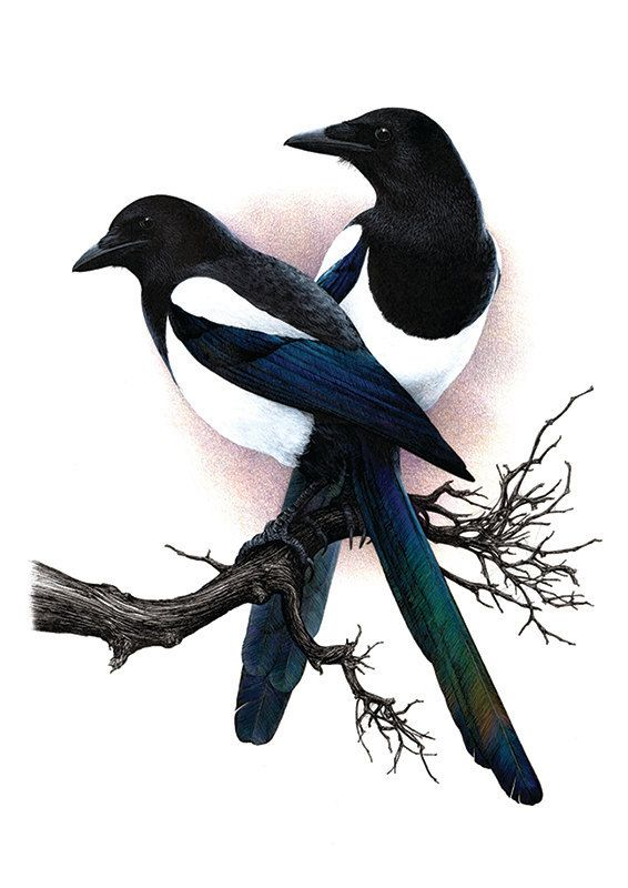 magpies two for a3 limited edition by