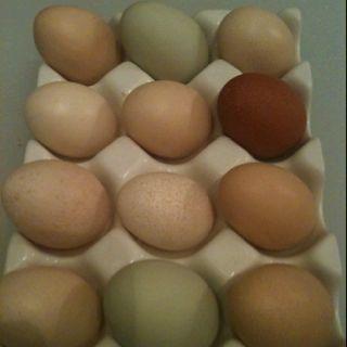 2 Easter egger eggs (green), 1 french marans egg, 1 mystery egg, 8 silkie eggs. Egg holder from anthropologie.