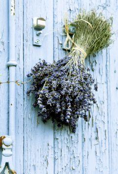 "Dried Fragrant Premium French Lavender 20"" Bundles  $9 each"