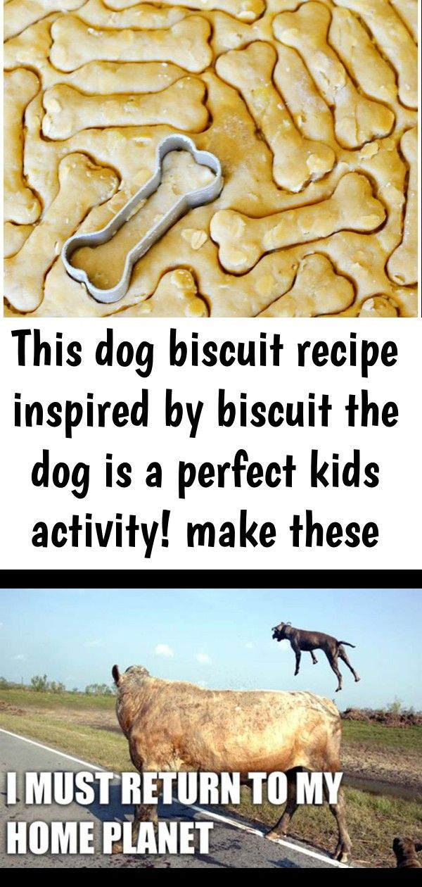 This dog biscuit recipe inspired by biscuit the dog is a perfect kids activity! make these peanut 2
