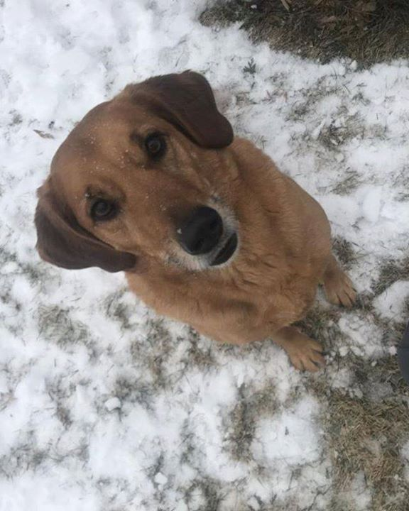 Is This Your Dog Hanover Unknown Breed Gender Date Found 12
