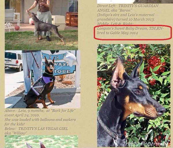 Breeder Review Breederreview Twitter Doberman Puppy Mills