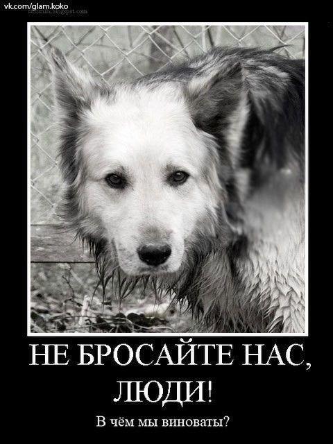Картинки с животными грустные с надписями