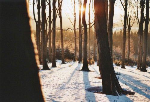 I hope I always have woods! <3