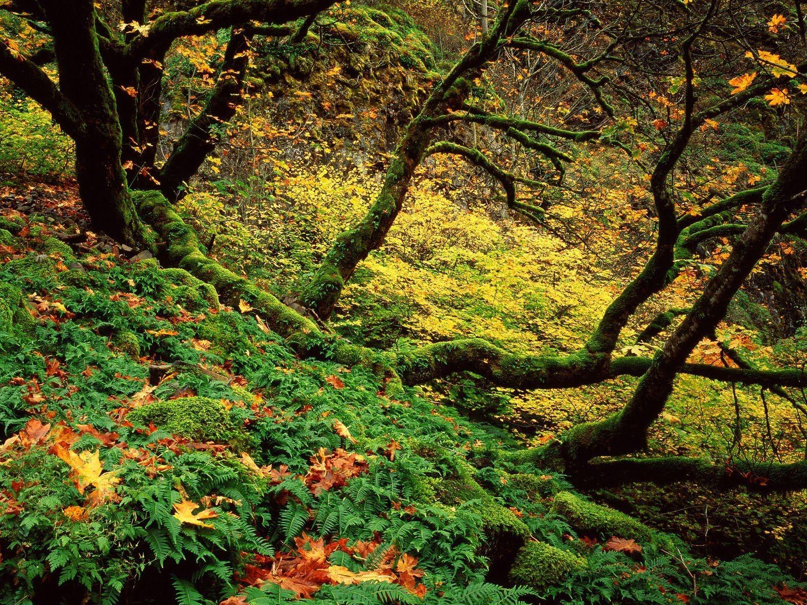 Columbia River Gorge Area, Oregon Cascades
