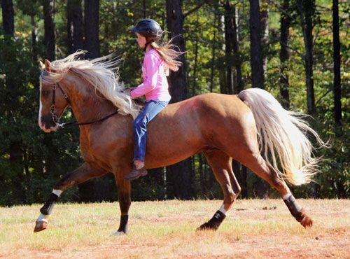 Cloud 9 Walkers - Tennessee Walking Horses -- The Beginning