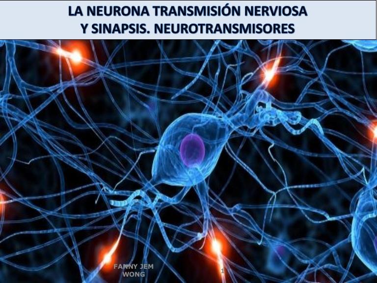 Pin De Sofía Aldana En Sinapsis Electrica Neuronas Neuronas Sinapsis Neurotransmisores