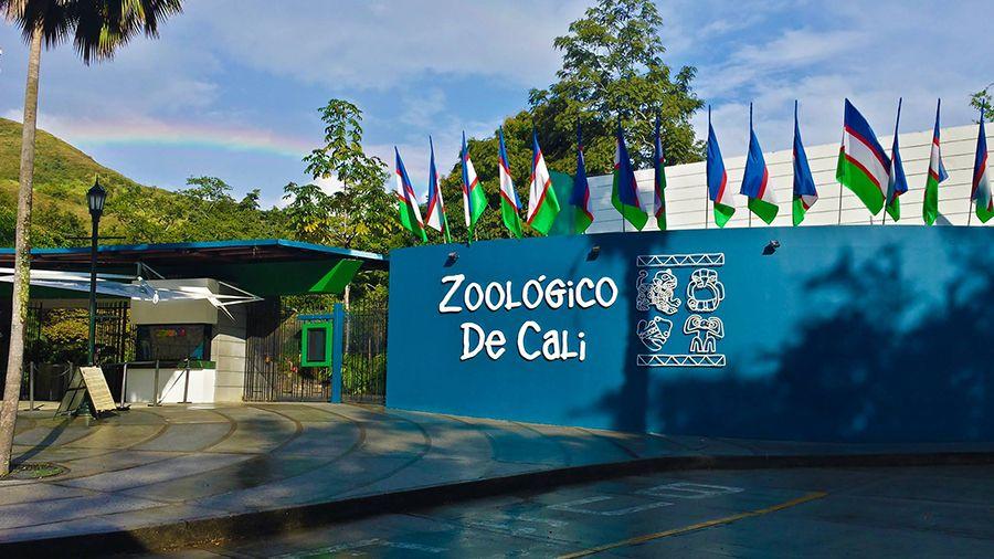 El zoológico de Cali es un parque zoológico fundado en el año de 1969 ubicado en la ciudad colombiana de Santiago de #Cali #Colombia