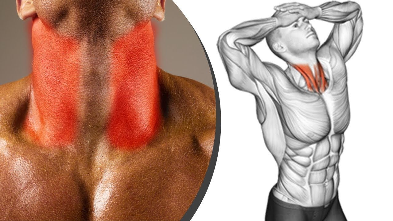 New Video By مهووس عضلات كمال الاجسام On Youtube تمرين لتقوية عضلات الرقبة والعنق تمارين عضلات الرقبة تمارين ل 12 Week Workout Weekly Workout Portrait Tattoo