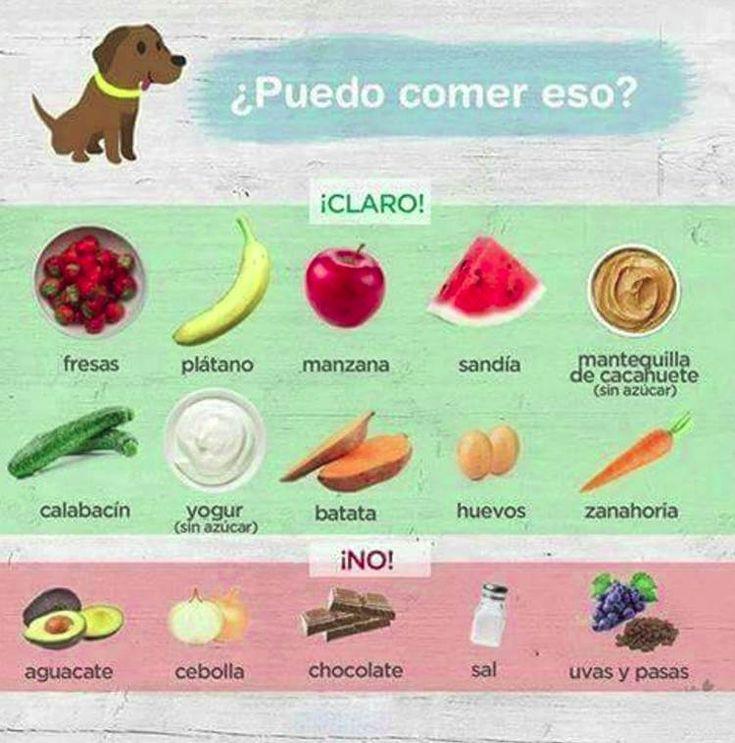 ¿Qué alimentos no pueden comer los perros?