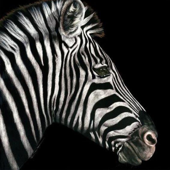 Profile of a Zebra - S...