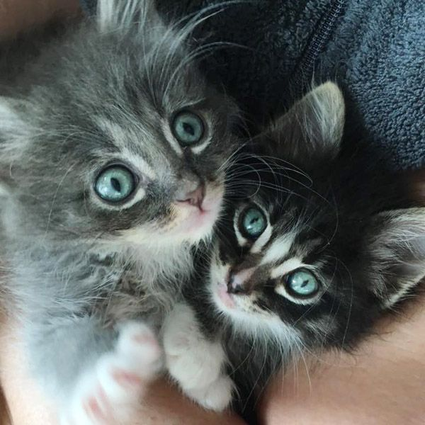 All kittens are born with blue eyes. Most will start to change color around Week 6 or 7.