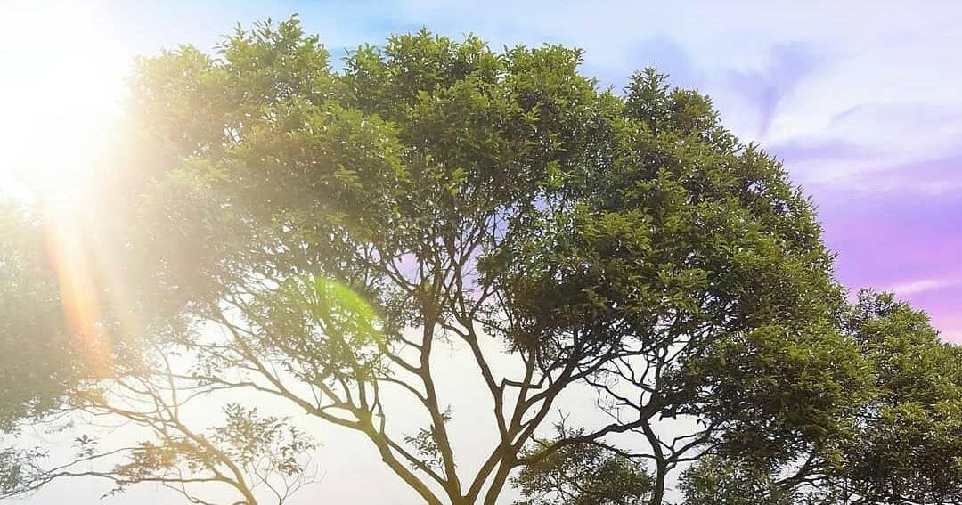 24 Pemandangan Gunung Salak Bogor Harga Tiket Masuk Dan Lokasi Bukit Halimun Salak Bogor Download Rumah Syariah Di Bogor Bonus Di 2020 Pemandangan Kota Bogor Alam