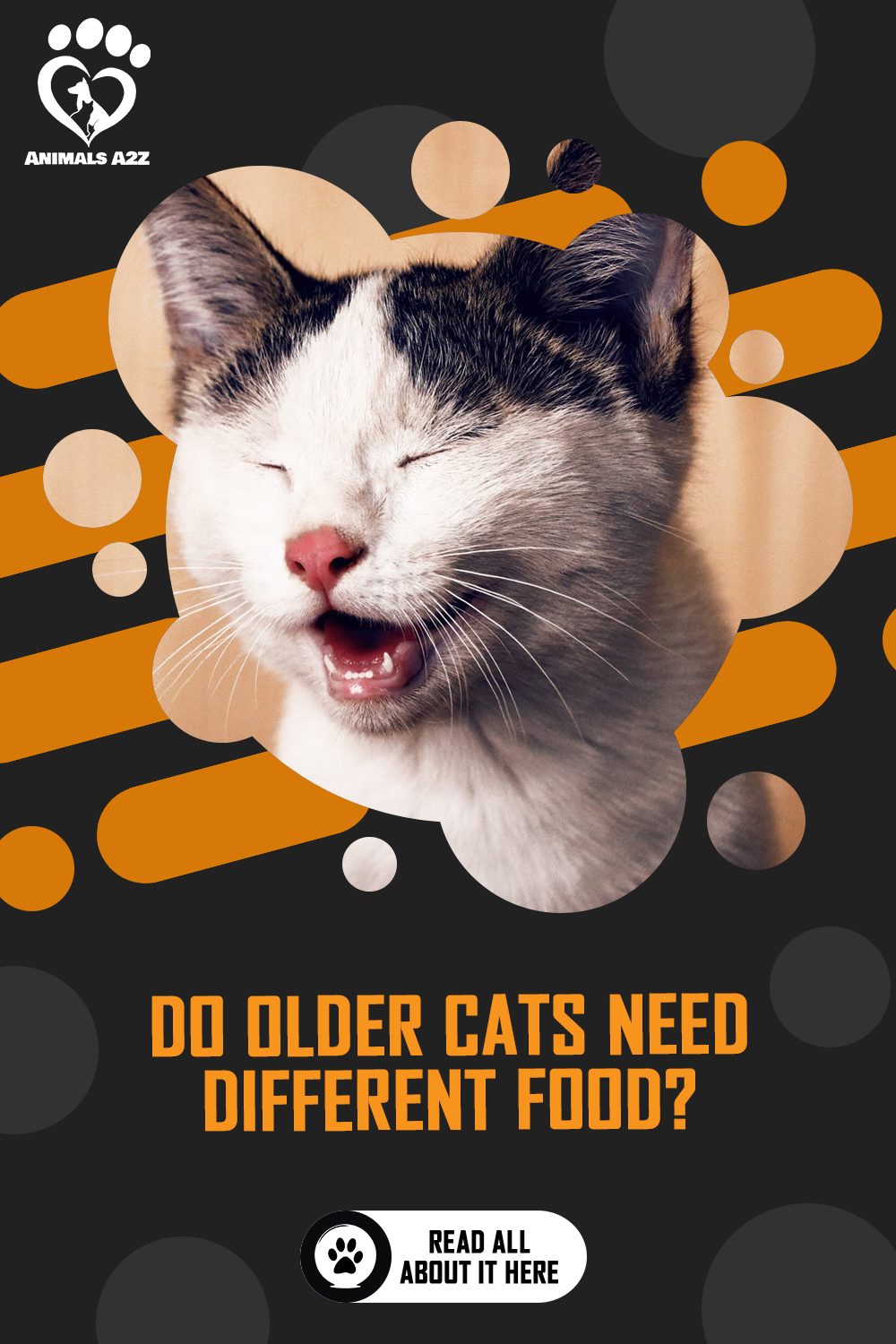 Do Older Cats Need Different Foods Detailed Answer In 2020 Older Cats Cat Facts Cat Questions