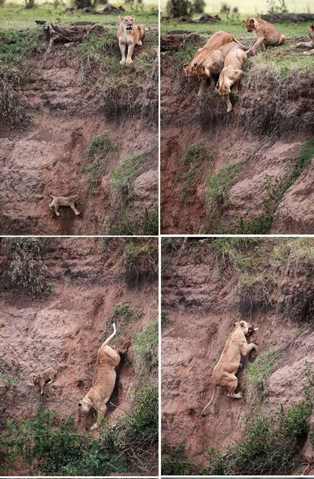 What a mother can do to save her child!