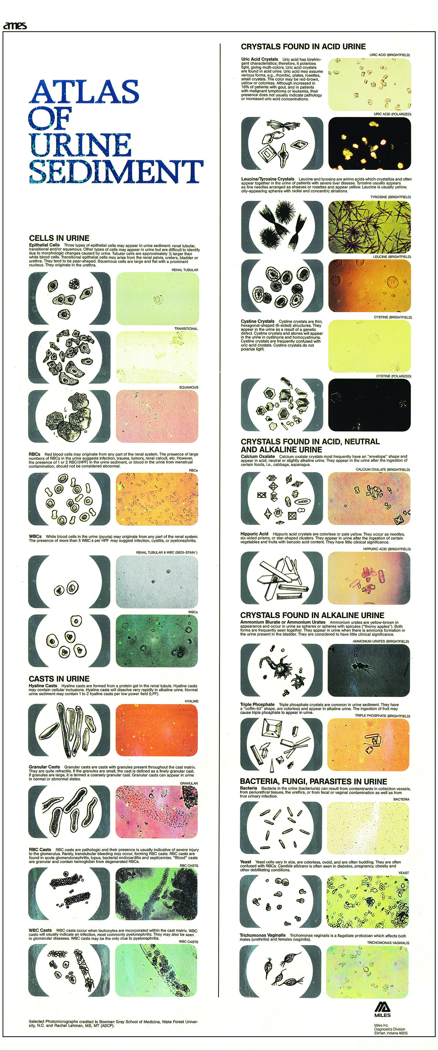 Atlas of Urine Sediment … | Vet Tech…
