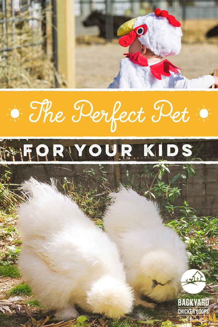 Which Breed of Chicken Makes a Great Pet for Children