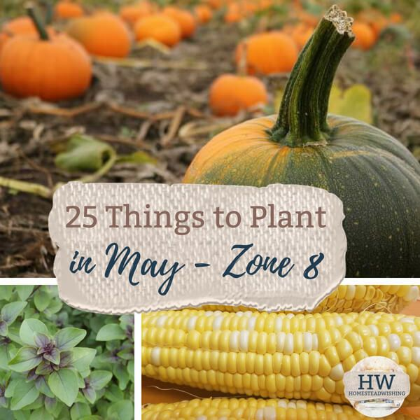 25 Things To Plant In May