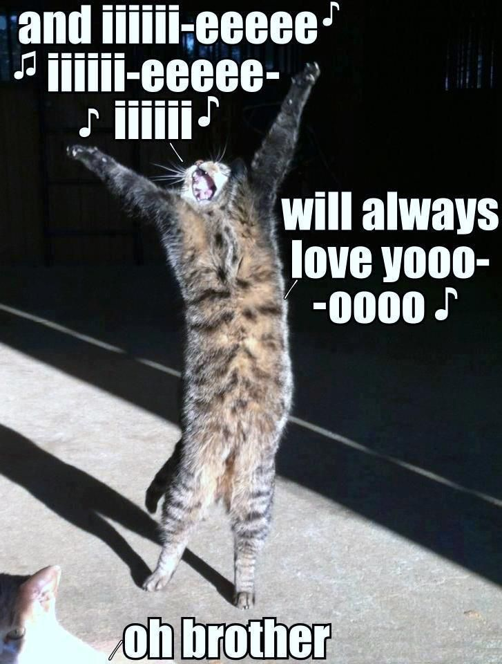 I Will Always Love You Funny Animal Pictures Animals Funny Animals