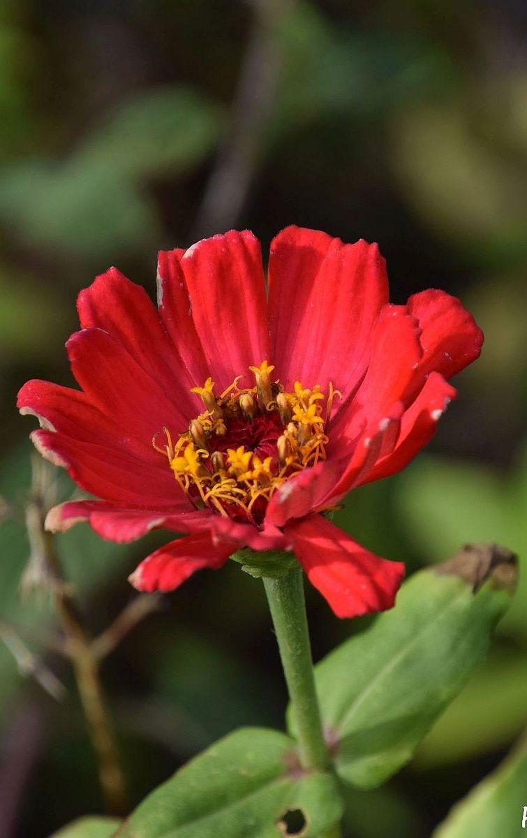 Pflanzen, die im Winter Farbe in den Garten bringen