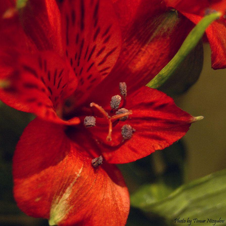 red by iamBlackfox