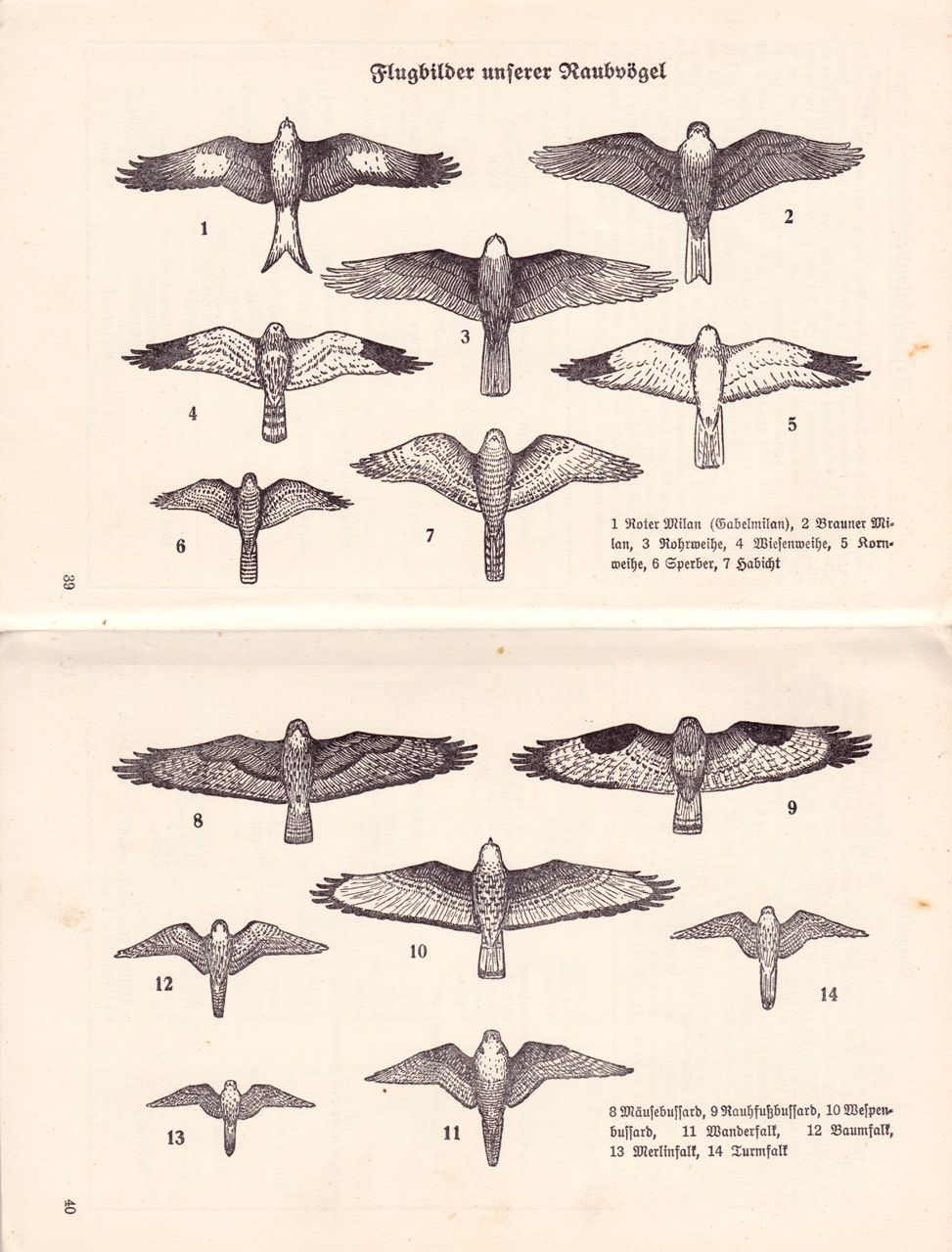 Flugbilder Unserer Raubvogel Aerial Photographs Of Our Birds Of Prey Raubvogel Tiere Bilder