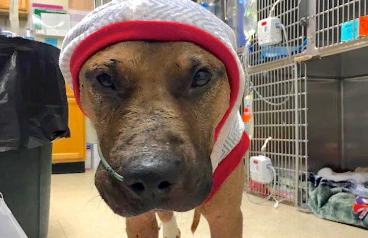 2 Teenage Girls Help Save Injured Dog's Life
